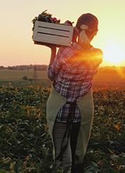 Frau trägt Gemüsekiste, Foto: StockMediaSeller/Shutterstock.com